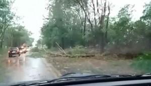 Missal: Temporal derruba árvores sobre a rodovia PR 495 -