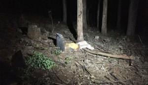 Medianeira: Homem morre ao ser atingido por galho enquanto cortava árvore -