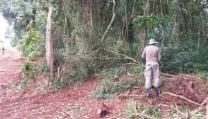 Vereador de Serranópolis do Iguaçu é preso por crime ambiental -