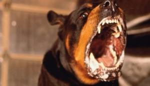 Tragédia: Criança de três anos morre após ser atacada por rottweiler em Itaipulândia -