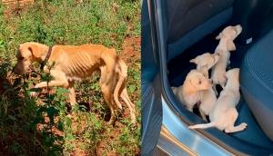São Miguel: Polícia Civil resgata cadela com quatro filhotes vítimas de maus tratos -