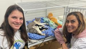 Serranópolis: Gata adota e amamenta cachorrinhos órfãos após perder filhotes  -