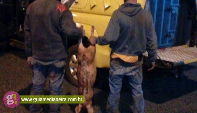 f600110b4fc São Miguel PM prende dois suspeitos após jogarem porco de moto em movimento